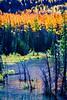 Colorado Fall Foliage 034 | Wall Art Resource
