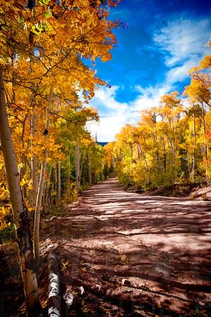 Colorado Fall Foliage 039 | Wall Art Resource