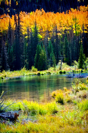 Colorado Fall Foliage 033 | Wall Art Resource