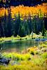 Colorado Fall Foliage 033 | Wall Art Resource