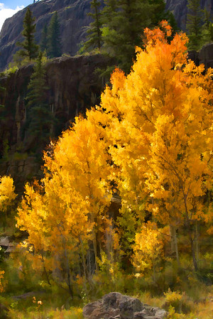 Colorado Fall Foliage 042 | Wall Art Resource