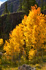 Colorado Fall Foliage 042 | Wall Art Resource