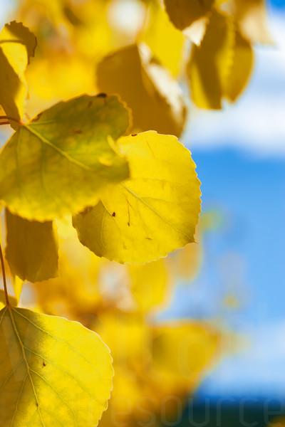 Colorado Fall Foliage 043 | Wall Art Resource