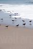 Sandy Beaches 025   Wall Art Resource