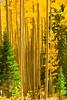 Colorado Fall Foliage 011 | Wall Art Resource