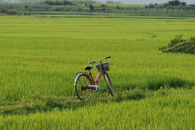 Bicycle in Rice Paddy, Phong Nha