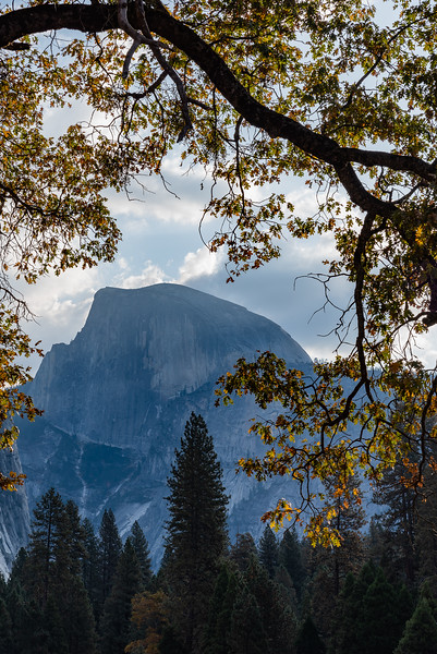 Autumn Oak over Half-Dome
