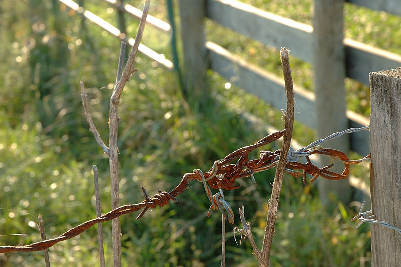 Barbed Wire in a Virginia Tech Cow Pasture