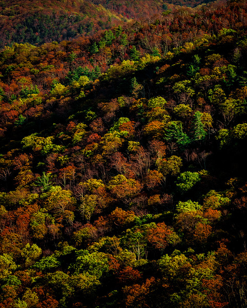 Fall in Shenadoah