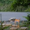 A deer at Sandy Stream Pond
