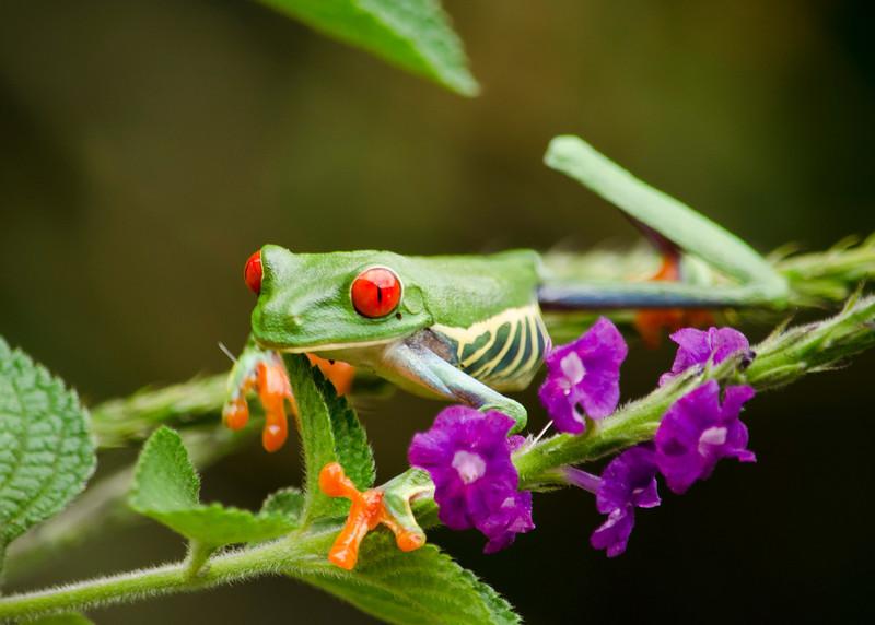 Tree Frog 6