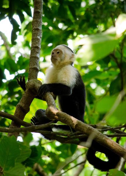 Buddah Monkey