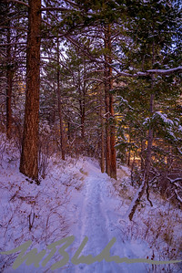 Trail Through The Pines