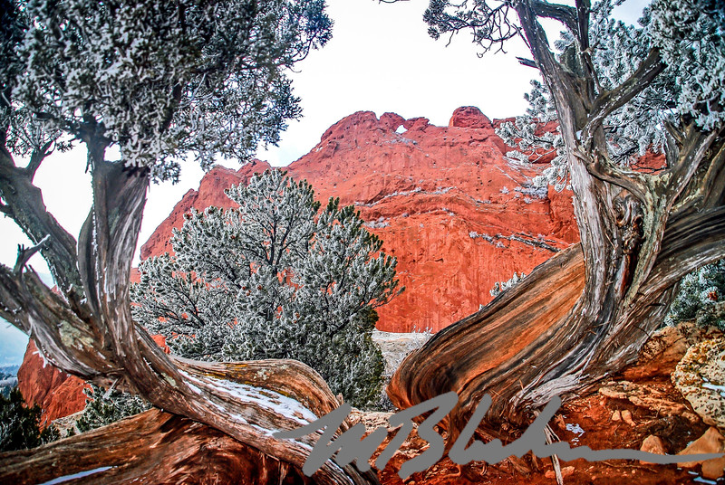Frosted Juniper and the Kissing Camels