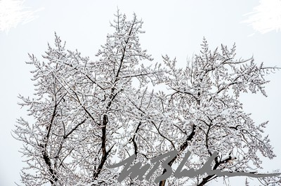 Snowflake Tree Branches
