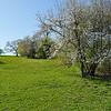 Horse pasture near Avon.  Nikon D5000 (April 2010).