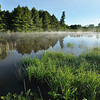 Little Rush Creek swamp, near Short Tract, just after sunrise.  Nikon D5000 (June 2010).