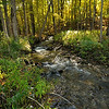 A tributary of Canaseraga Creek spills off Rattlesnake Hill.  Nikon D5000 (October 2010).