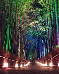 nightbamboo