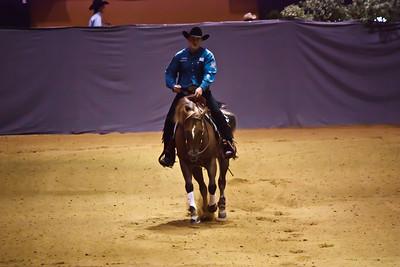Quarter Horse (Equita 2010)