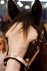 Pinto / Paint Horse (Equita 2010)