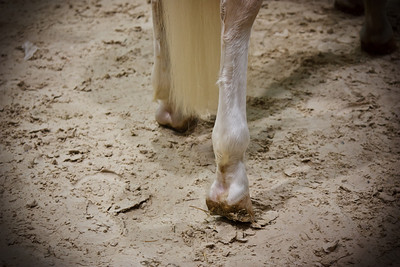 Hooves (Equita 2010)