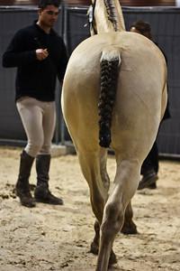 Dun horse (Equita 2010)