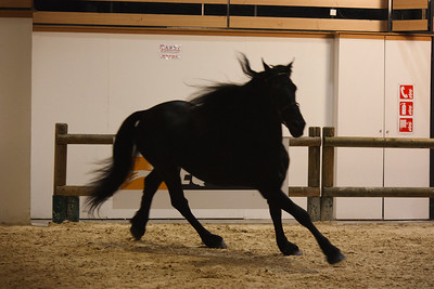 Arabo-Friesian (Equita 2010)