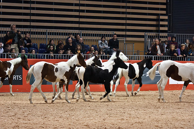Pinto / Paint Horse Foals (Equita 2010)
