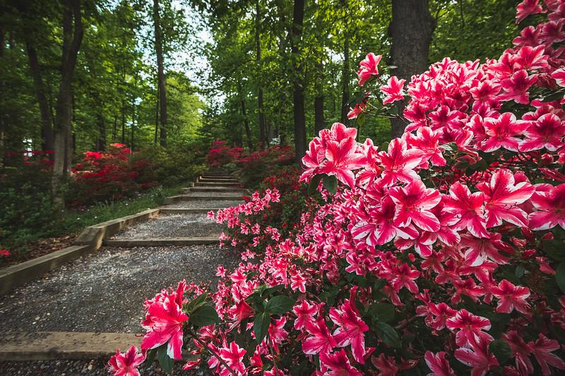 Arboretum Blooms
