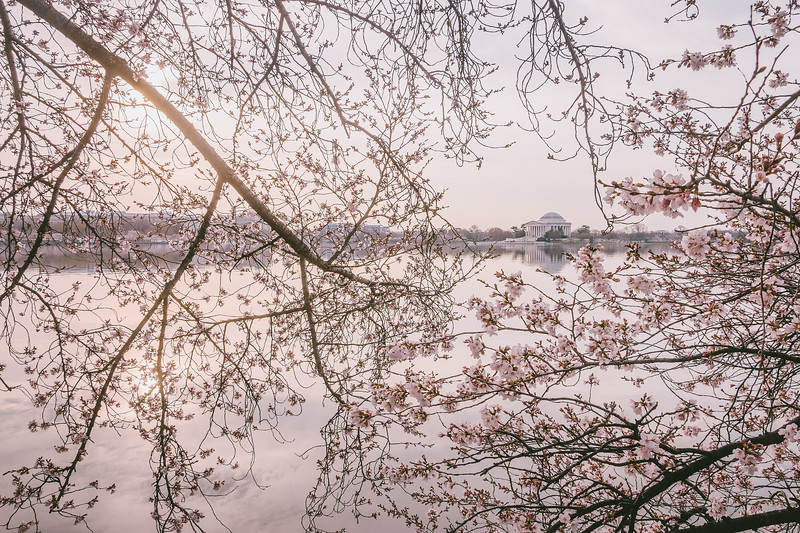 Beyond the Blossom Wall
