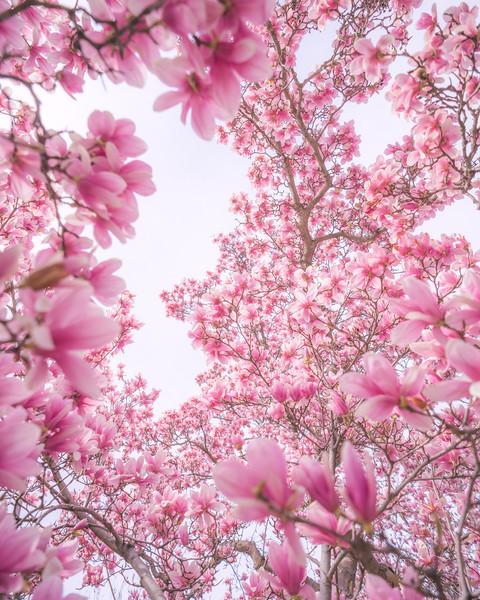 Magnolia Madness