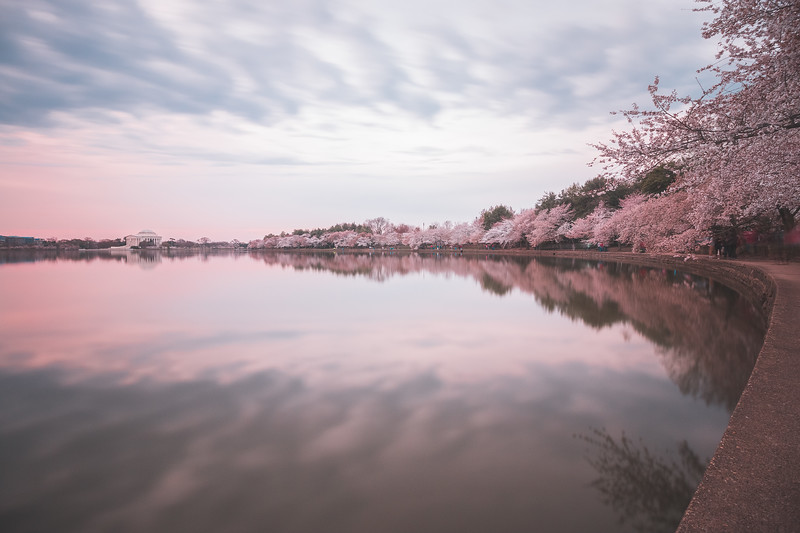 Sakura Circuit