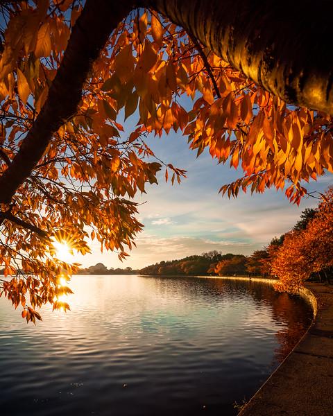 Sweet November Morning