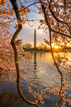"""A Flare for Blossoms"" - Washington Monument, Washington, D.C.   Recommended Print sizes*:  4x6  