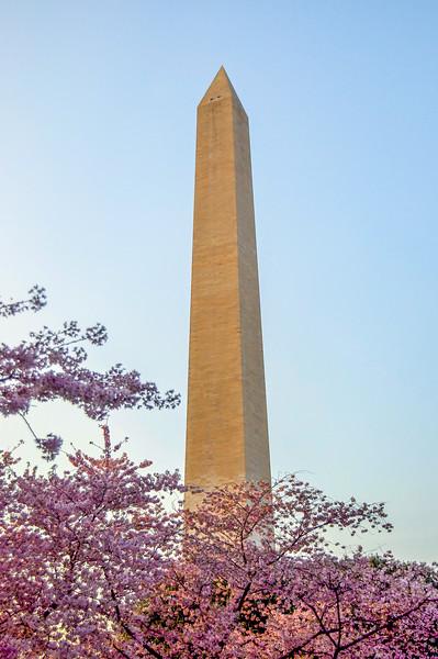 Cherry Blossom Festival and the Washington Monument