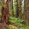 Deep Forest Moss