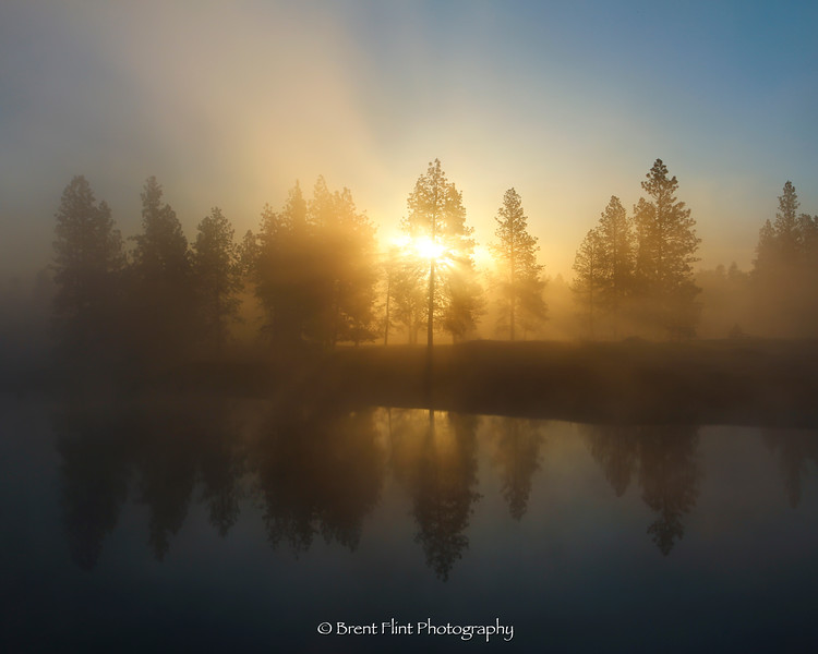 DF.4575 - sunrise through fog and trees with reflections in a small pond, Spokane County, WA.
