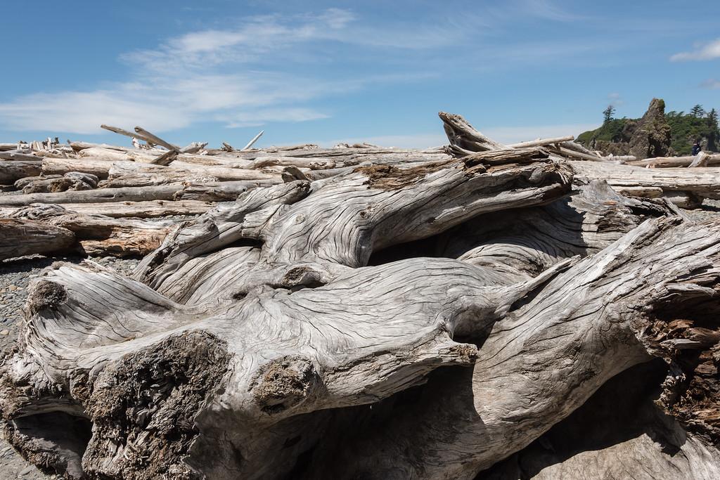 Olympic Coast Driftwood