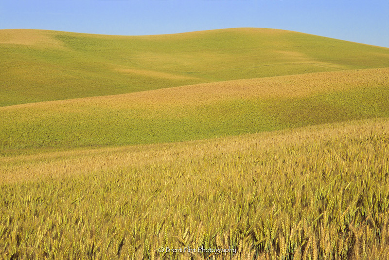 S.4065 - wheat field pattern, Palouse Region, WA.