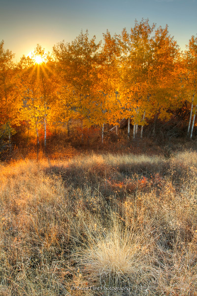 DF.4908 - Sunrise through aspen grove in fall, Turnbull National Wildlife Refuge, WA.