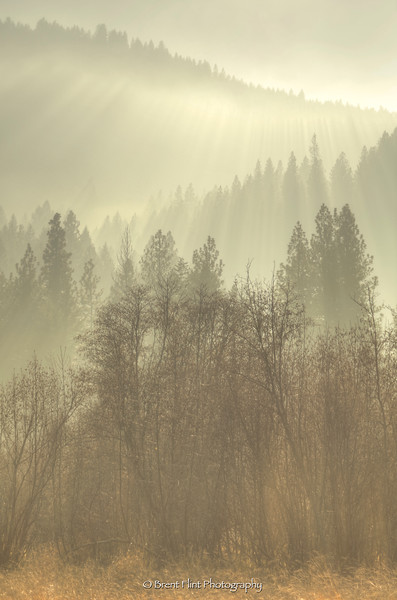 DF.5297 - Sunbeams through fog and trees, Liberty Lake County Park, WA.