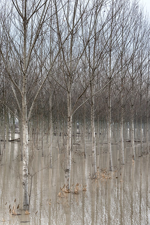 Secchia's Flood - Soliera, Modena, Italy - December 12, 2017