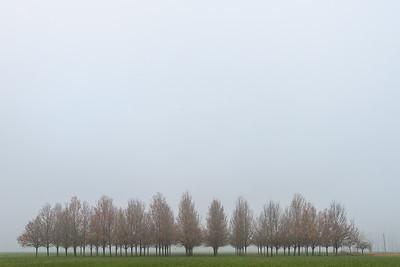 Trees - Cadelbosco di sopra, Reggio Emilia, Italy - December 9, 2018