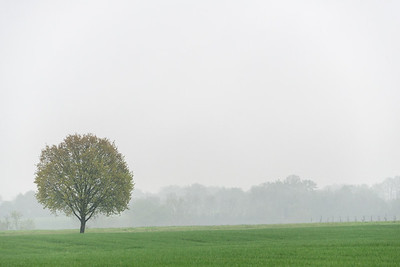 Lonely Tree - Albinea, Reggio Emilia, Italy - April 14, 2019