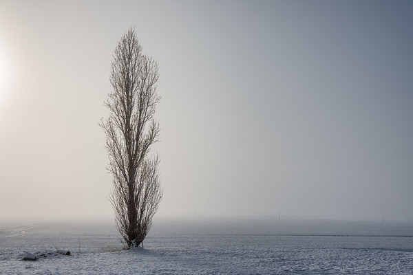 Lonely Tree - Sant'Agata Bolognese, Bologna, Italy - January 31, 2019