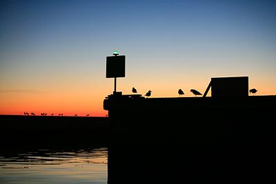 birds-on-breakwater2