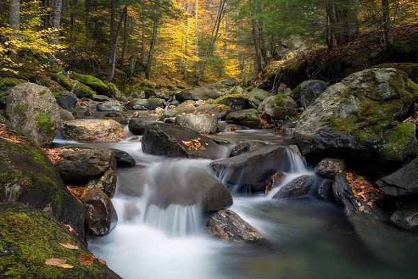 Transient Nature
