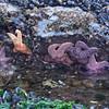 Starfish Comraderie