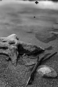 Drift wood on edge of Flathead Lake